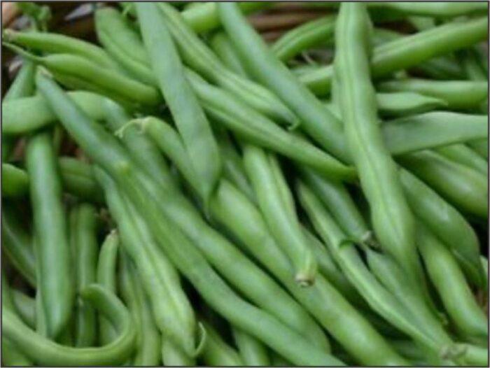 Bean Bush - Gourmet Delight