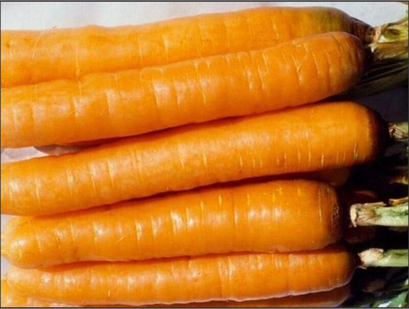 Carrot Cape Market