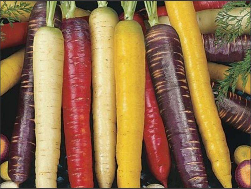 Carrot Rainbow blend