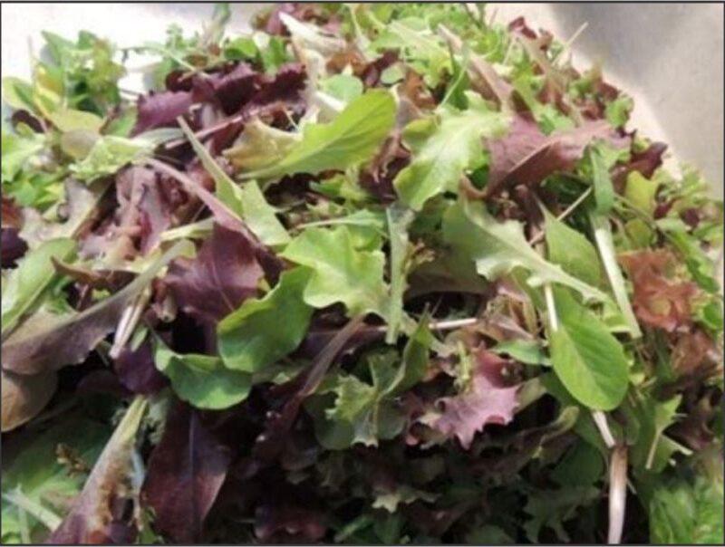 Lettuce Luxury Loose Leaf