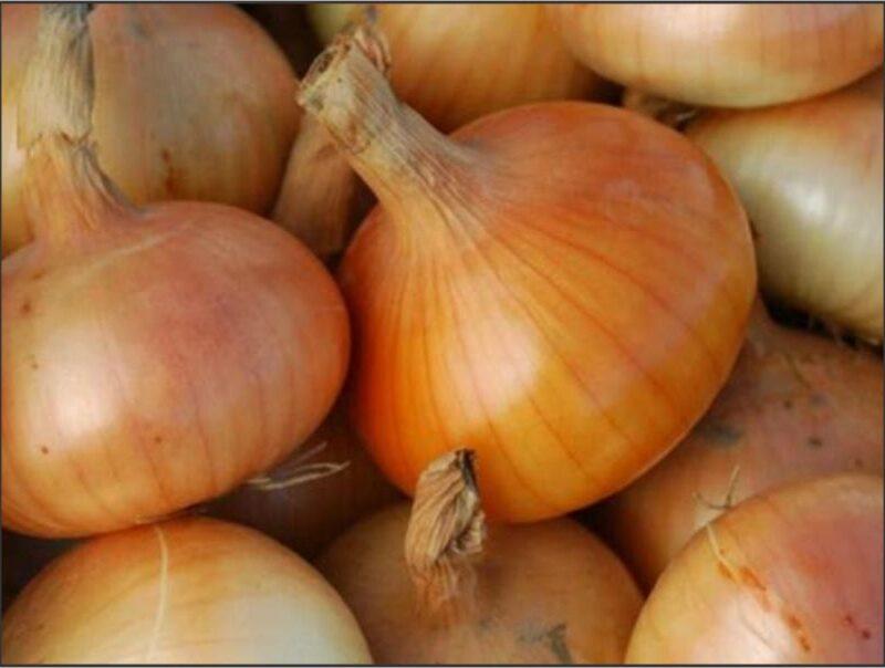 Onion Australian Brown