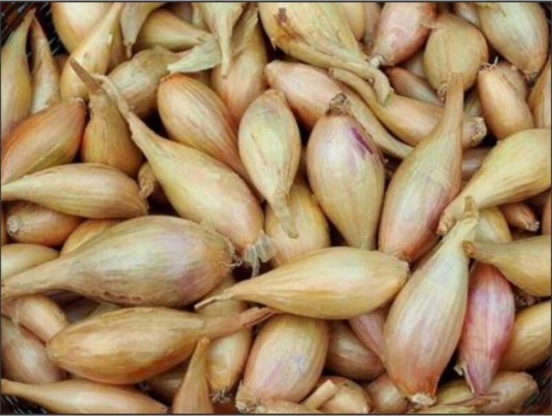 Onions Shallots