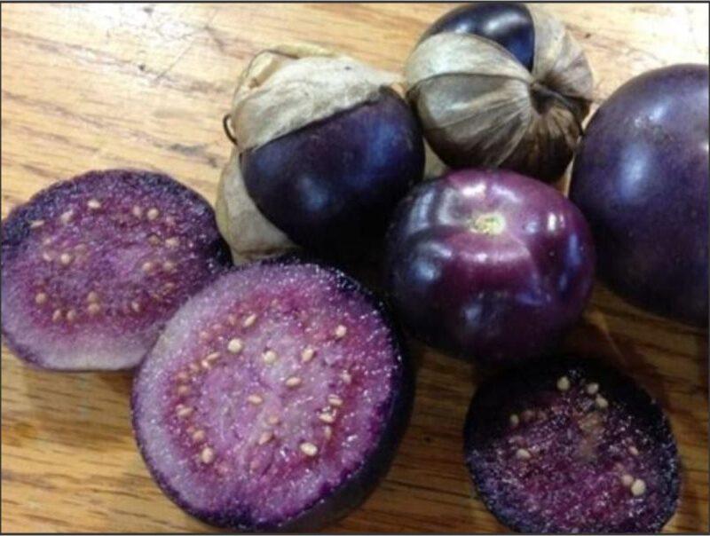 Tomatillo Really Purple