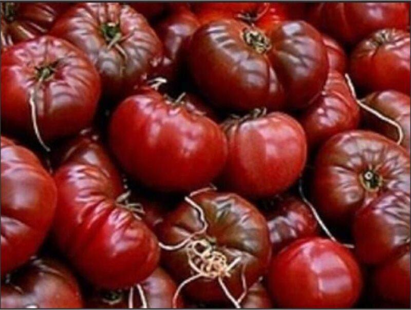 Tomato Aunt Ginny's Purple